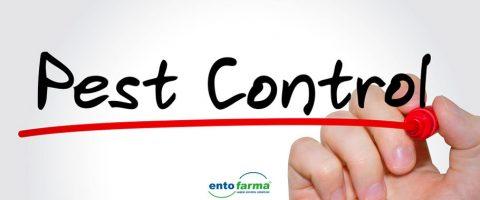 pest-kontrol-nedir-proseduru-sirketleri-firmalari-istanbul